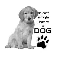 I'm not single Labrador Férfi póló
